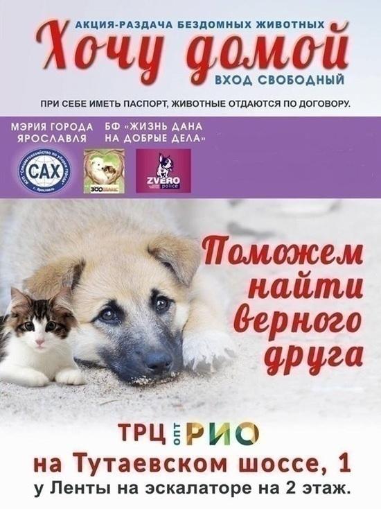 В Ярославле пройдет ярмарка и раздача бездомных собак
