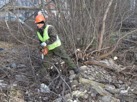 В Иванове сносят старые деревья и приводят в порядок остальные
