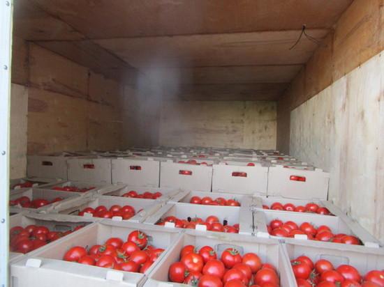 Продукты и саженцы роз не пустили в Оренбуржье из Казахстана и Киргизии