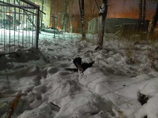 Воздух, воду и снег в Сегеже возьмут на пробу для исследования