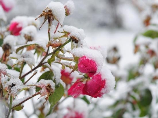 Зима близко: столичные синоптики рассказали, насколько