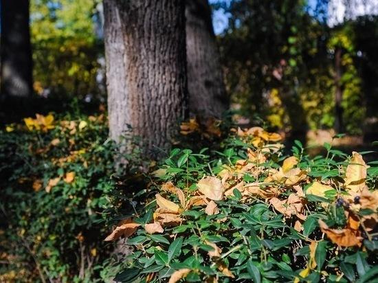 Как вести себя, если заблудился в лесу