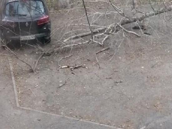 Дерево упало на автомобиль в Ростове