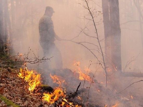 Оперативная обстановка: на Кубани 6 действующих лесных пожаров