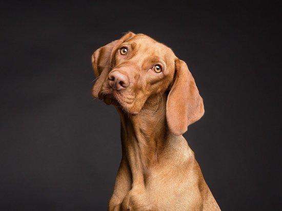 Ученые вывели точную формулу перевода собачьего возраста вчеловеческий
