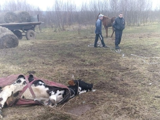 Скотское обращение: в «тульских» соцсетях публикуют факты жестокости над животными