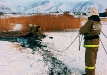 Операцию по спасению тонущих коров провели на Алтае