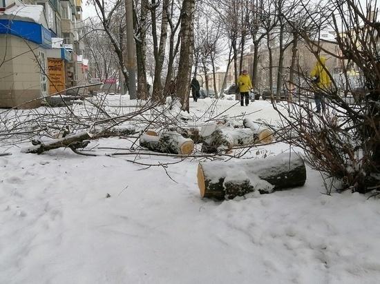 В Кирове на женщину упало дерево