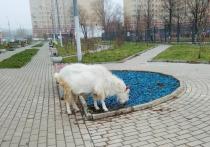 В Подмосковье электричка сбила стадо коз: пять погибли
