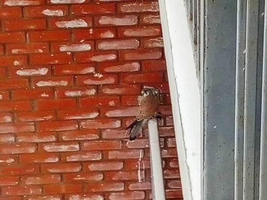 Хищник поселился возле многоэтажки в Хабаровске