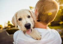 Собачий возраст ближе к возрасту человека, чем считалось ранее