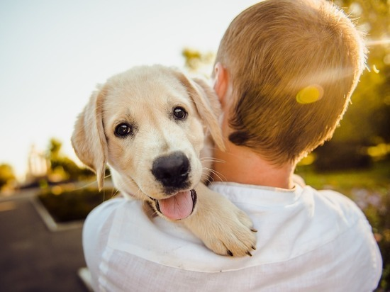 Выведена формула сравнения возраста человека и собаки