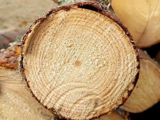 «Черные» лесорубы спилили в Забайкалье сосны почти на 2 млн рублей