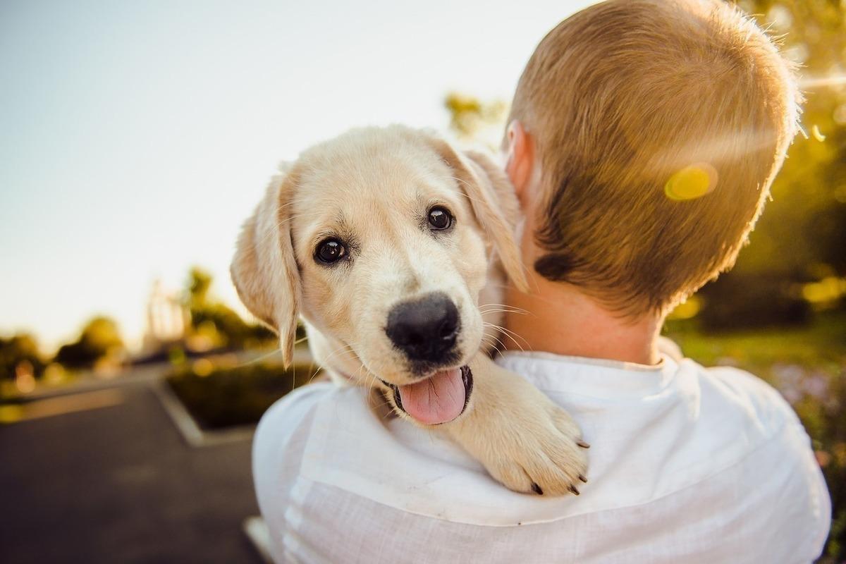 смотреть картинки собаки и люди цвета