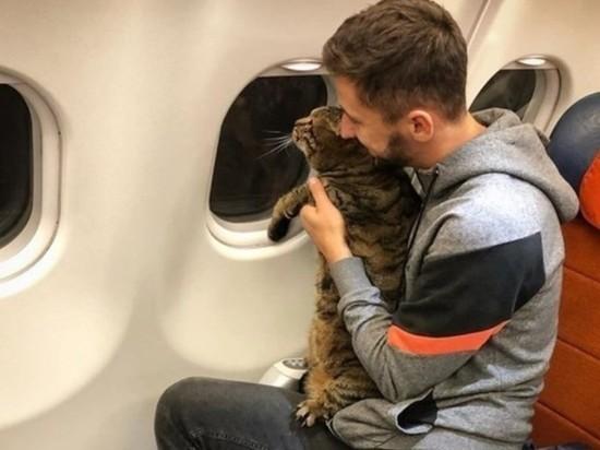Минтранс пообещал заняться проблемой толстых котов-авиапассажиров