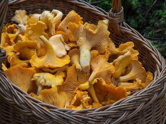 Минсельхозу разрешили следить за сбором грибов и ягод