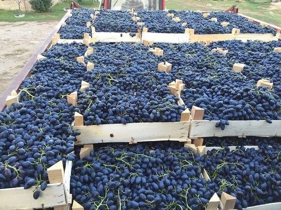 Вице-спикер Госдумы: Ставрополье получит федеральный закон о виноградарстве
