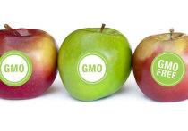 Массовое производство продуктов с ГМО открывают для Казахстана новые перспективы