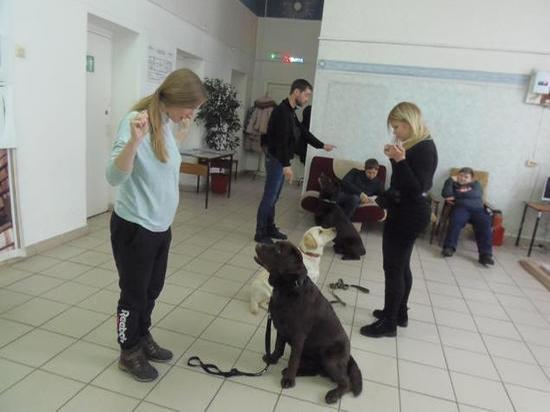 В Кемерове собаки будут помогать в реабилитации особенных ребятишек