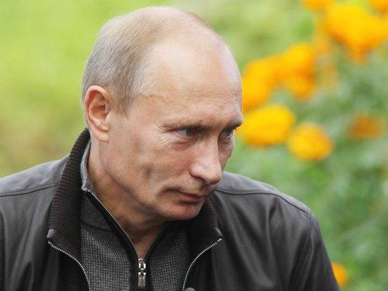 Перед приездом Путина в Петербурге замаскировали свалку