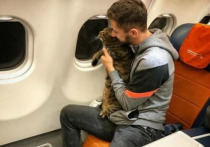 Заводчики кошек раскритиковали действия пассажира Аэрофлота Михаила Галина, который провез в салоне самолета своего десятикилограммового кота, взвесив на регистрации другое животное