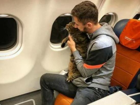 Заводчики кошек осудили пассажира Аэрофлота, который обманом провез толстого кота