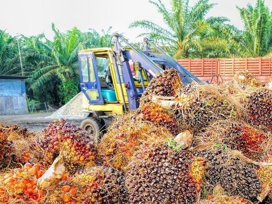 В Малайзии поблагодарили Россию за большие закупки пальмового масла