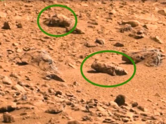 """Пресс-релиз ученого, """"нашедшего насекомых на Марсе"""", удалили после скандала"""