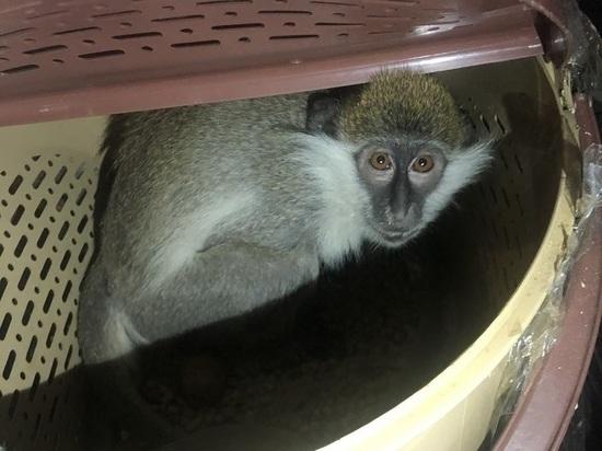 В Ростовскую область пытались незаконно провезти 22-х обезьян