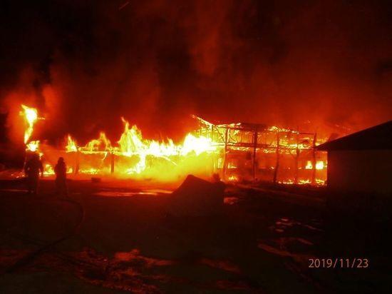 Прокуратура взяла на контроль проверку по факту пожара в природно-ландшафтном парке под Воронежем