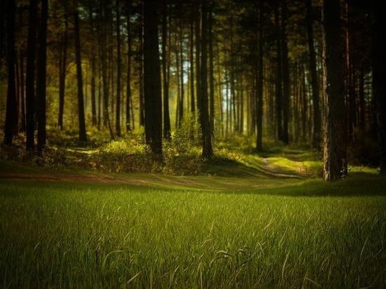 На Ставрополье вместо свалки появится зеленый парк