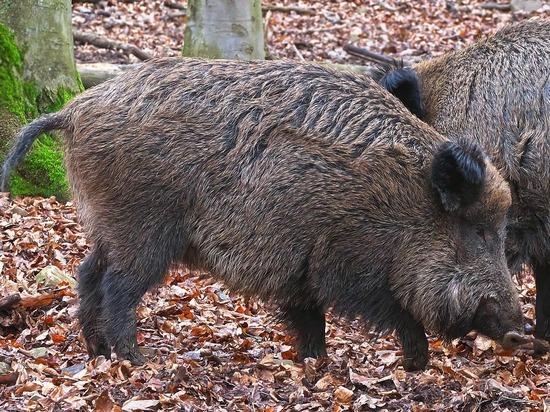 Зверское убийство в США: «Русские дикие свиньи» насмерть растерзали американку