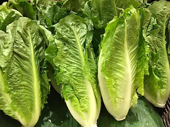 CDC предупреждает: салат «романо» заражен бактерией