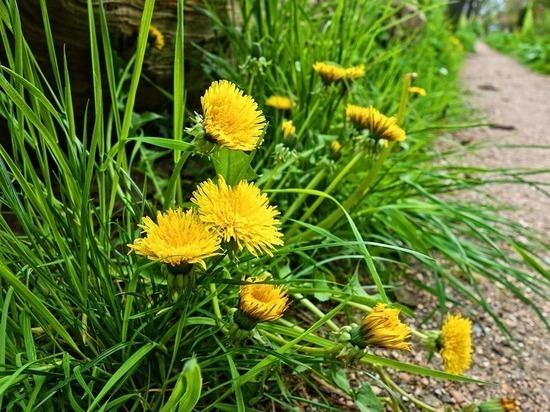 Названа трава, убивающая раковые клетки в течение 48 часов