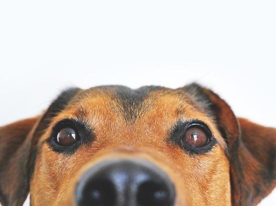 Кусачая собака нанесла ущерб своему хозяину в Улан-Удэ на 35 тысяч рублей