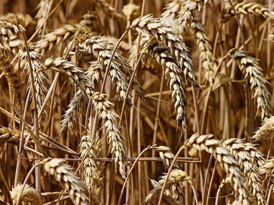 В Башкирии появится комплекс по глубокой переработке зерна стоимостью 63 млрд рублей