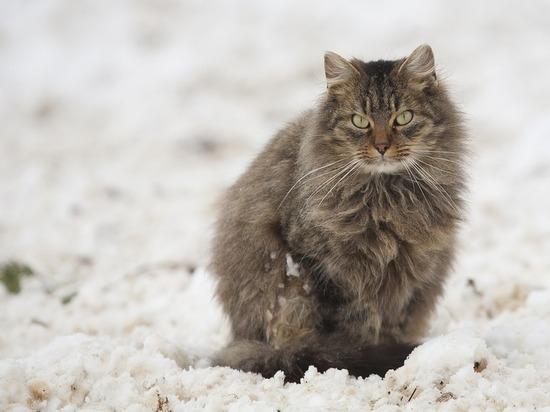 Снег и порывистый ветер ожидаются в Пскове 1 декабря
