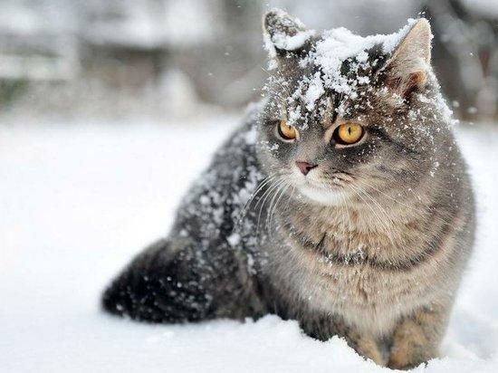 Синоптики предсказали удивительно теплый декабрь в Красноярске