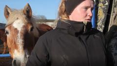 Подмосковный приют дает старым лошадям «Шанс на жизнь»