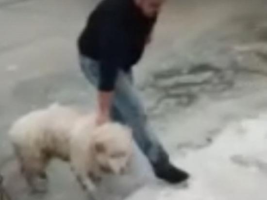 В Костроме два парня спасли собаку, провалившуюся под лед на Волге
