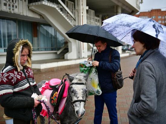 В Ярославле лошади погрызли элементы благоустройства