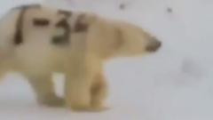 Белый медведь с надписью