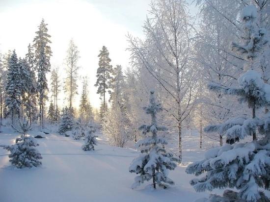 В нижегородских лесах лис провакцинировали от бешенства