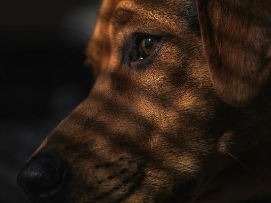 Жители Владимира вновь жалуются на бездомных собак