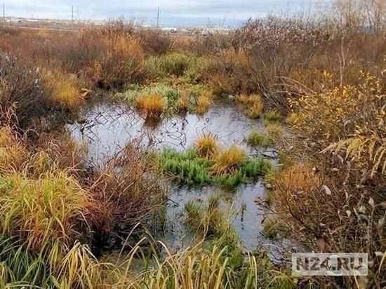 В Лабытнанги для многодетной семьи выделили кусок болота