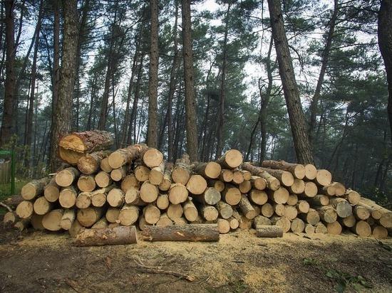 ОПГ вывезла из Забайкалья и Бурятии лес на 800 млн рублей