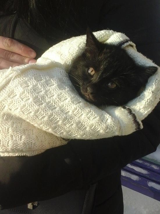 Студентка из Новокузнецка ищет хозяев для облитого водой и выброшенного на улицу котёнка