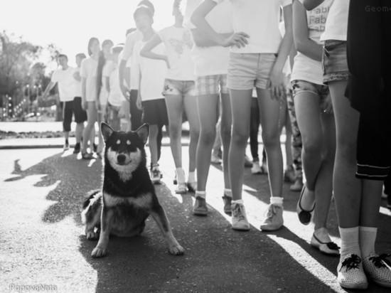 Что происходит со строительством приюта для собак в Астрахани
