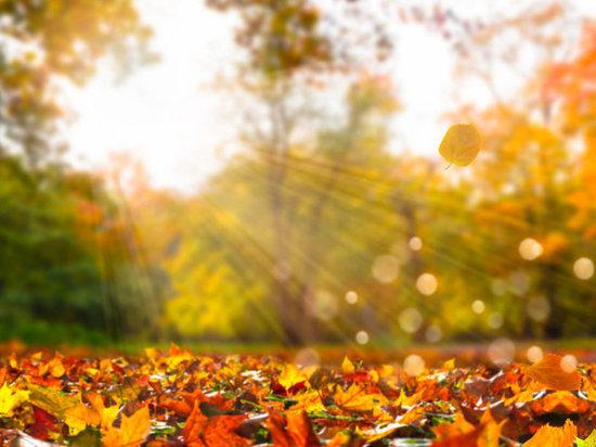 Осень в Москве побила многолетние рекорды тепла