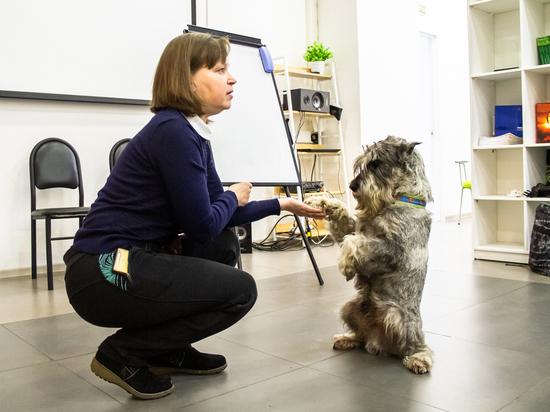 Хабаровчан приглашают научиться не только помогать животным правильно, но и понимать своих питомцев